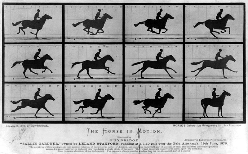 Animals Early Early Animation Device