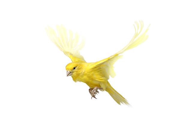 Очень красивые фото птиц от Эндрю Цукермана (15 фото)