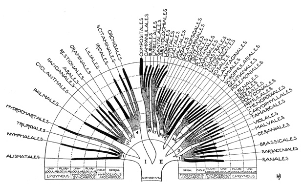 trees of life  a visual history of scientific diagrams explaining evolution