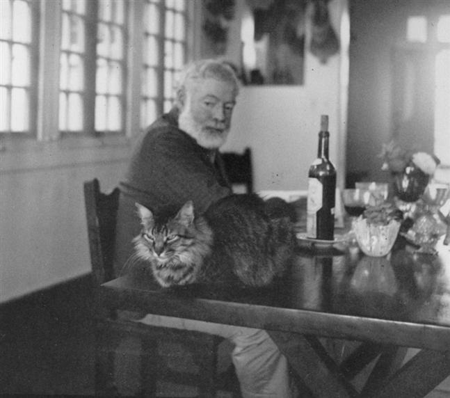 hemingway a kočka
